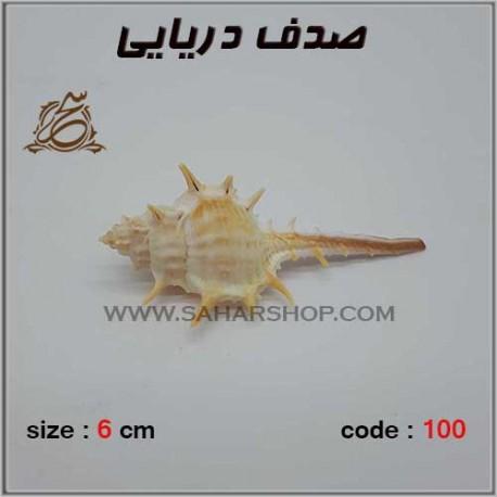 صدف دریایی کد 100